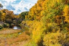 Álamos tembloses de la caída a lo largo de un río de Wyoming Imagen de archivo libre de regalías