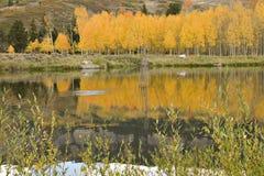 Álamos tembloses de oro de Colorado reflejados fotografía de archivo