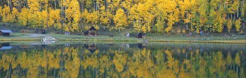 Álamos tembloses del otoño Fotografía de archivo