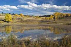 Álamos tembloses del otoño Imagen de archivo libre de regalías