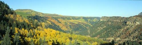 Álamos tembloses en otoño Imagen de archivo libre de regalías