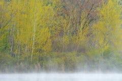 Álamos tembloses Hall Lake de la primavera Imagen de archivo libre de regalías