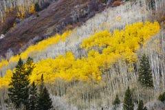 Álamos tembloses, otoño, Crystal Mill Town, Colorado foto de archivo libre de regalías