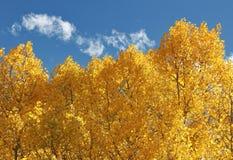 Álamos tembloses y cielo azul Imagen de archivo libre de regalías