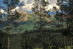 Álamos tembloses y montaña Fotografía de archivo