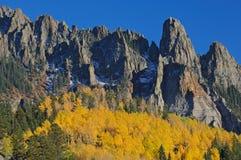 Álamos tremedores do outono imagens de stock