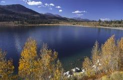 Álamos tremedores do outono no lago june Imagens de Stock Royalty Free