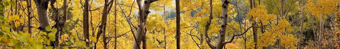 Álamos tremedores dourados acima de Santa Fe, nanômetro fotografia de stock