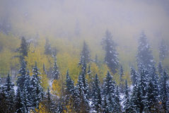 Álamos tremedores e primeira neve, Ridgeway, CA, última estrada do rancho do dólar fotos de stock