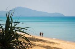 Áloe en la playa Foto de archivo libre de regalías