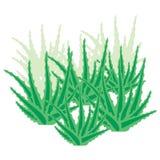 Áloe overgrown Vera ilustración del vector