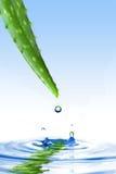 Áloe verde vera con gota del agua fotos de archivo