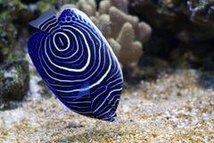 Ángel rodeado azul Foto de archivo libre de regalías