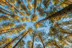 Ángulo bajo del bosque imagenes de archivo