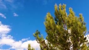 Ángulo bajo tirado de árbol de pino