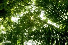 Ángulo inferior de la selva tropical Fotografía de archivo libre de regalías