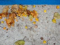 Ángulo muerto concreto con las hojas de otoño caidas-abajo Fotos de archivo