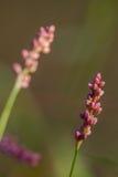 Ángulos 2 de la púrpura foto de archivo libre de regalías