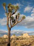 Árbol único Imagen de archivo libre de regalías