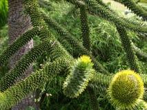 Árbol único. Imagenes de archivo