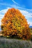 Árbol único del otoño Imagenes de archivo