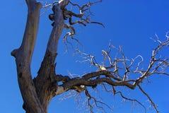 Árbol 01 muertos Foto de archivo libre de regalías
