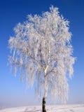 Árbol #04 del invierno Fotografía de archivo