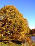 Árbol #1 Fotografía de archivo