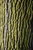 Árbol Imagenes de archivo
