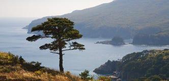 Árbol 2 de la costa costa Fotos de archivo libres de regalías