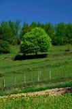 Árbol Imagen de archivo libre de regalías