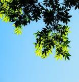 Árbol Imagen de archivo