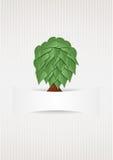 Árbol Fotos de archivo libres de regalías