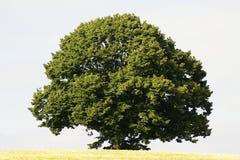 Árbol Fotografía de archivo