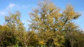 Árbol almacen de metraje de vídeo