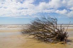 Árbol abajo en la playa Foto de archivo libre de regalías