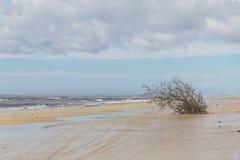 Árbol abajo en la playa Fotografía de archivo libre de regalías