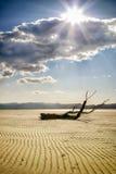 Árbol abandonado en área arenosa Imagen de archivo