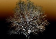 Árbol abstracto de la cubierta de nieve Fotografía de archivo