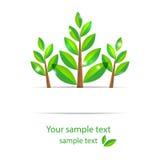 Árbol de la primavera con los pétalos verdes Foto de archivo libre de regalías