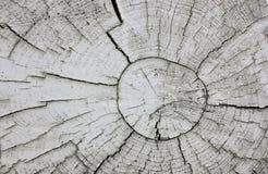 Árbol abstracto del fondo Imágenes de archivo libres de regalías