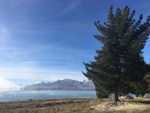 Árbol además del lago Fotos de archivo