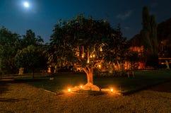Árbol adornado para una boda Imagen de archivo libre de regalías