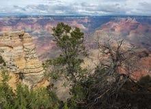 Árbol agradable sobre el borde del sur de Grand Canyon, Arizona, los E.E.U.U. Imagenes de archivo