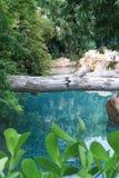 Árbol agrietado y un río azul imagen de archivo