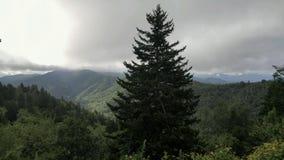 Árbol ahumado de la montaña Imagenes de archivo