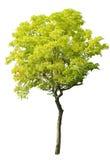 Árbol aislado Imagenes de archivo
