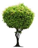 Árbol aislado Fotos de archivo