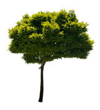 Árbol aislado Foto de archivo libre de regalías