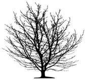 Árbol aislado Imagen de archivo